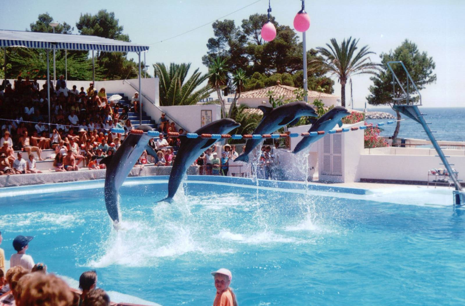 Take the family for a day at marineland for Pool show barcelona