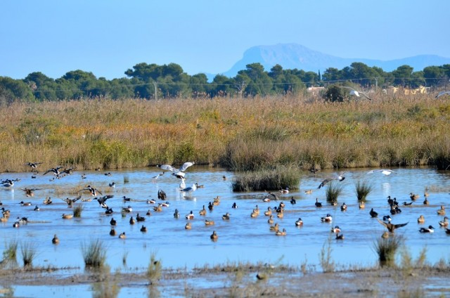 S'Albufera Nature Park @ Club MAC